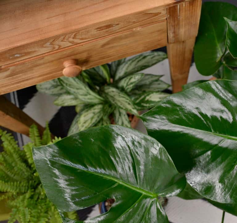 discover your wild with indoor plants and greenery