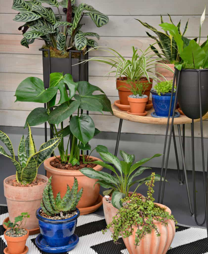 Discover Your Wild with Indoor Plants