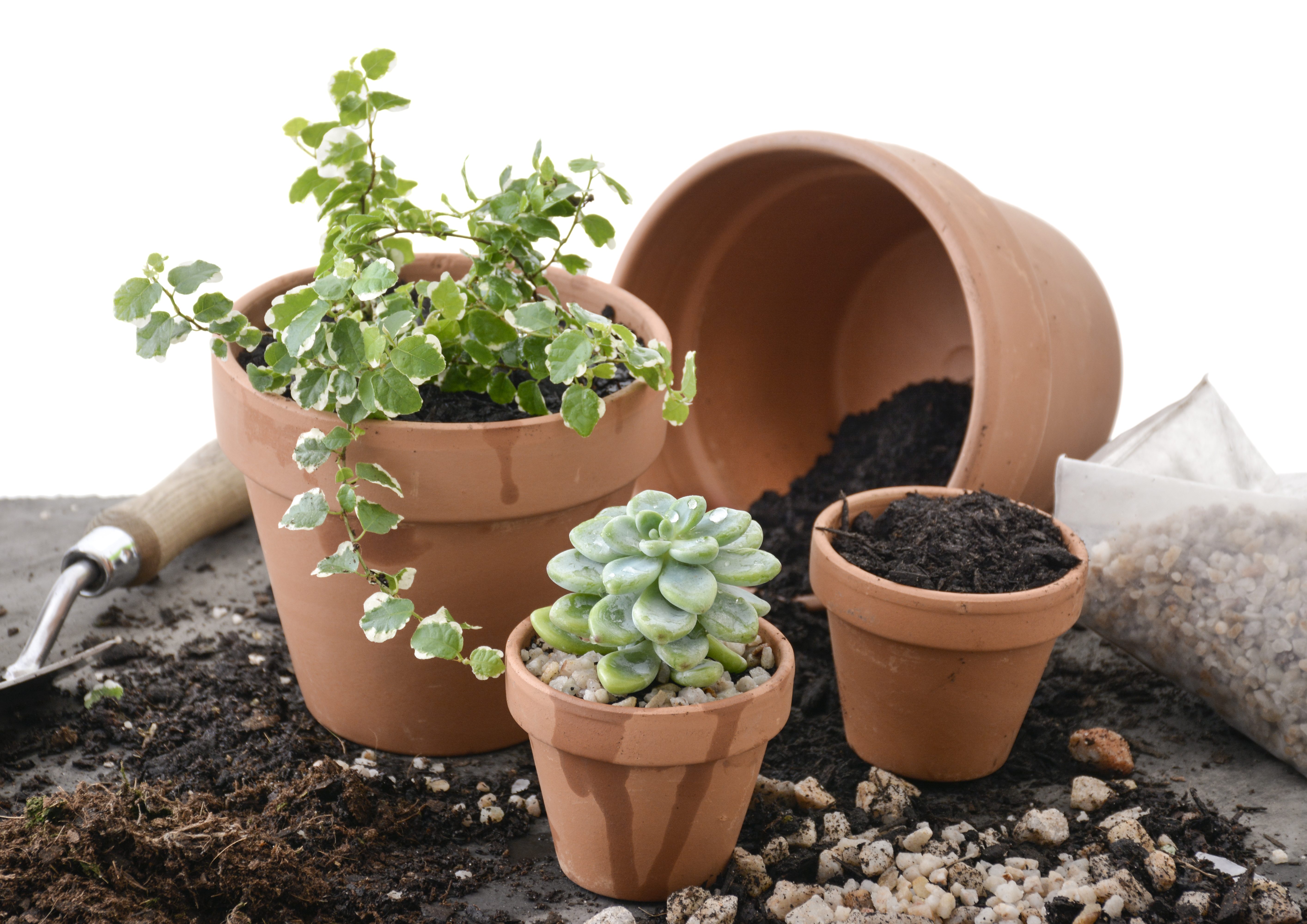 Potting indoor plants potting indoor plants your guide for Top 20 indoor plants