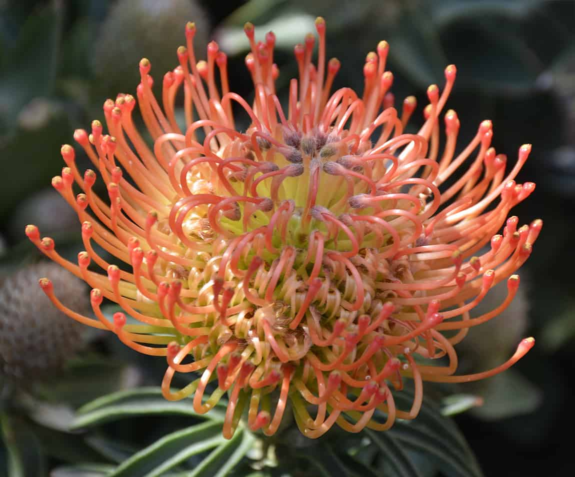 Indigenous Plants For Your Summer Garden From Lifestyle