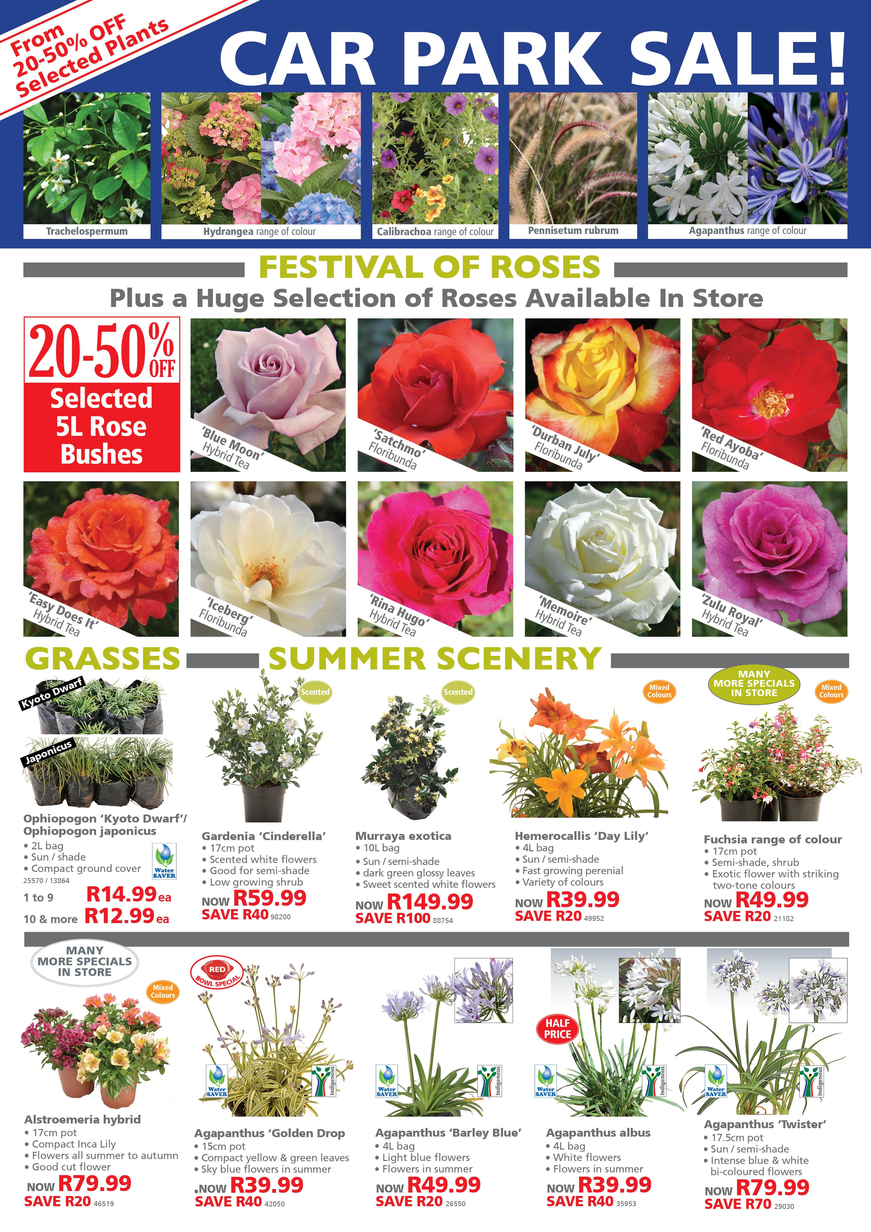 Lifestyle Home Garden Specials plant shop and nursery johannesburg