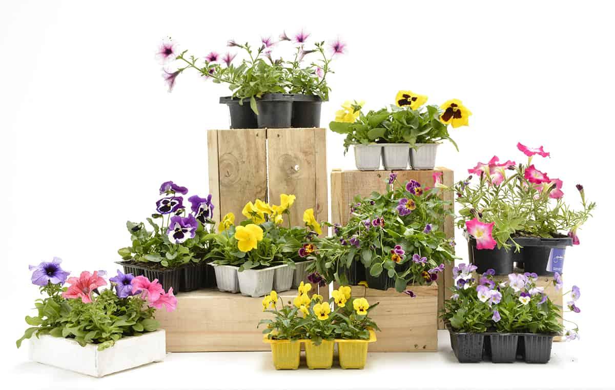 April in Your Garden