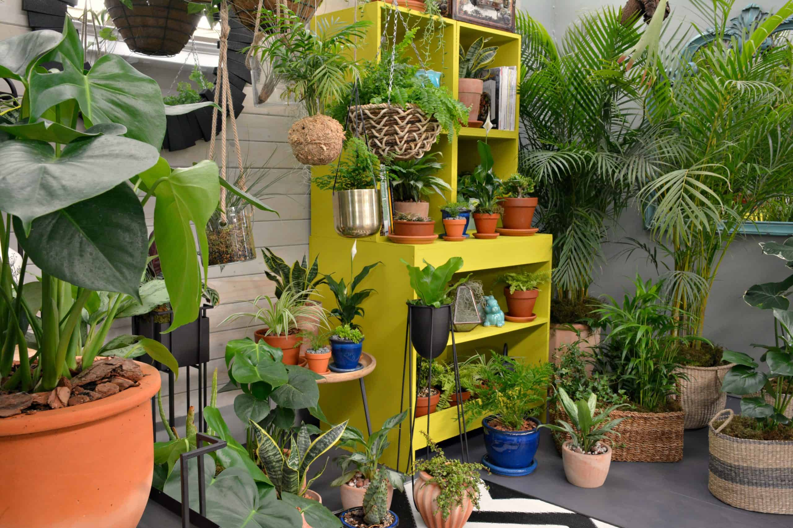 Discover Your Wild. Decorating with indoor plants