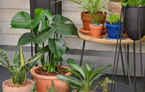 Discover Your Wild. Benefits of Indoor Plants
