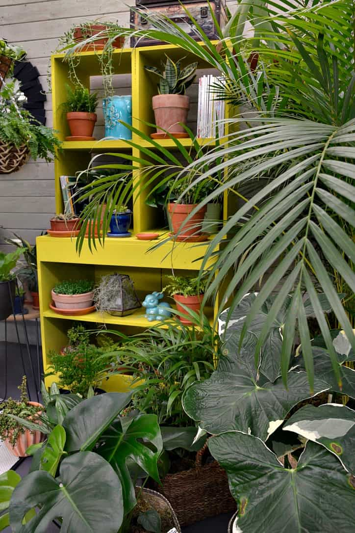 Discover Your Wild with indoor plants and Lifestyle Home Garden this Winter