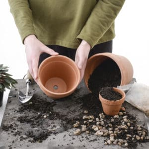 Potting Indoor Plants Step 1