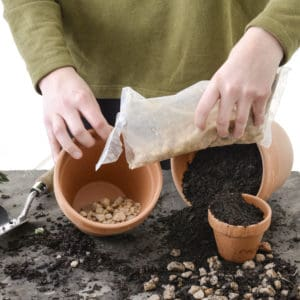 Potting Indoor Plants Step 2