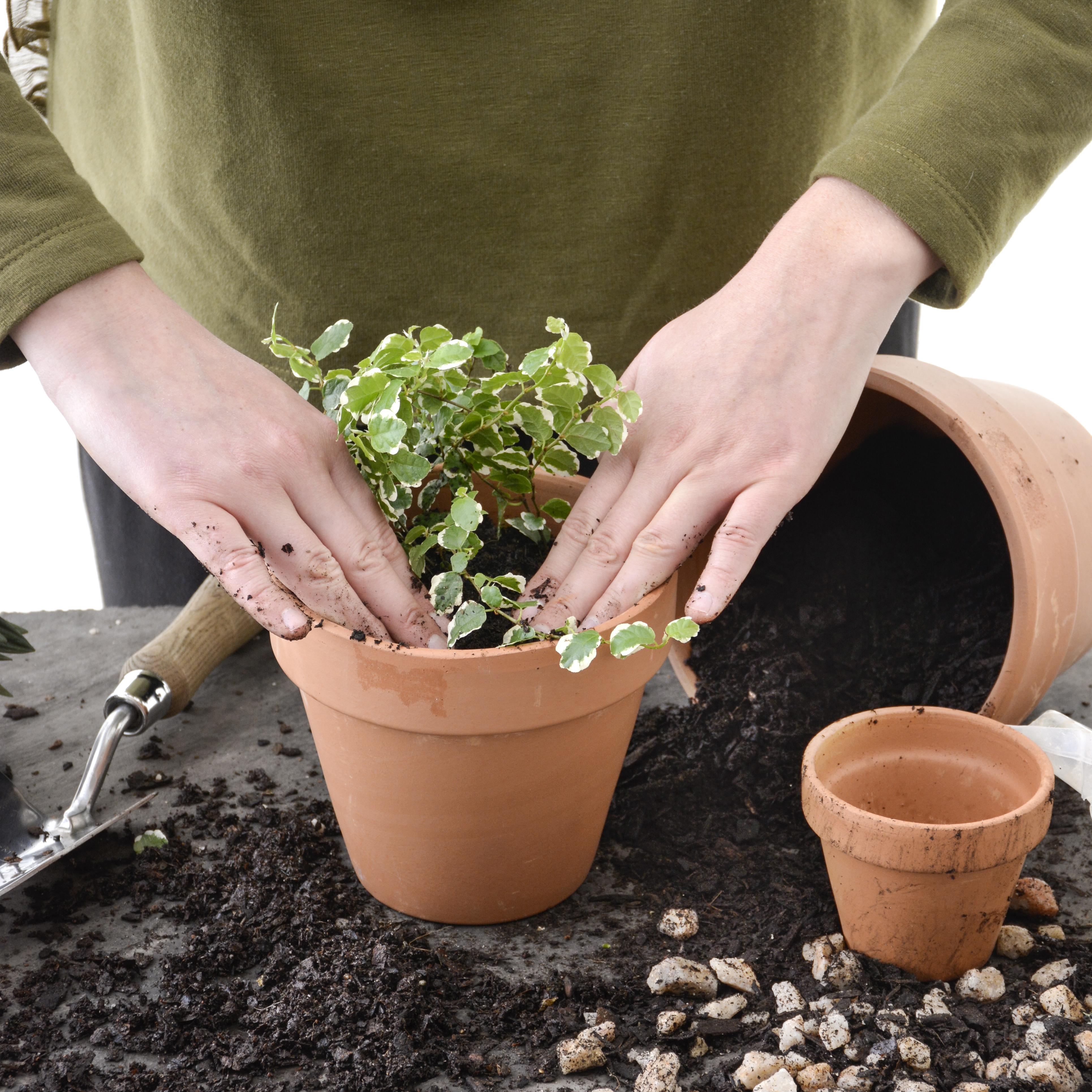 Potting indoor plants your guide from lifestyle to for Planting a garden