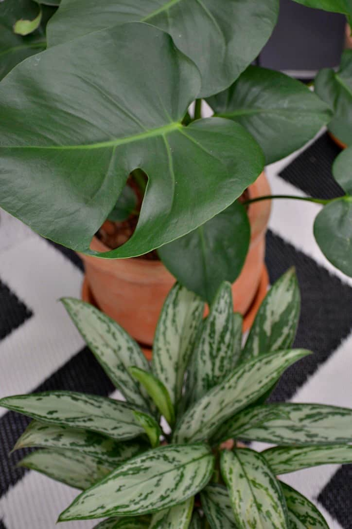 Discover The Benefits Of Indoor Plants With Lifestyle Home