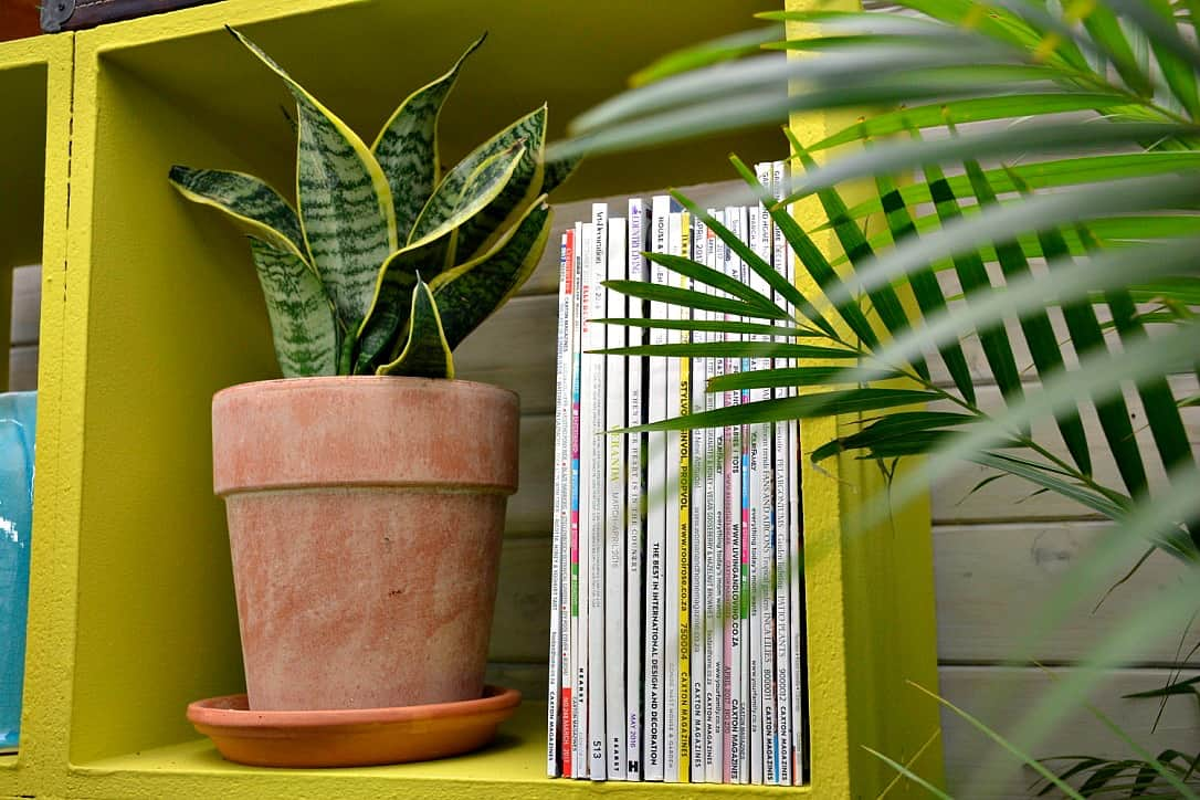 Decorating With Indoor Plants By Making Your Own Living Book Stopper
