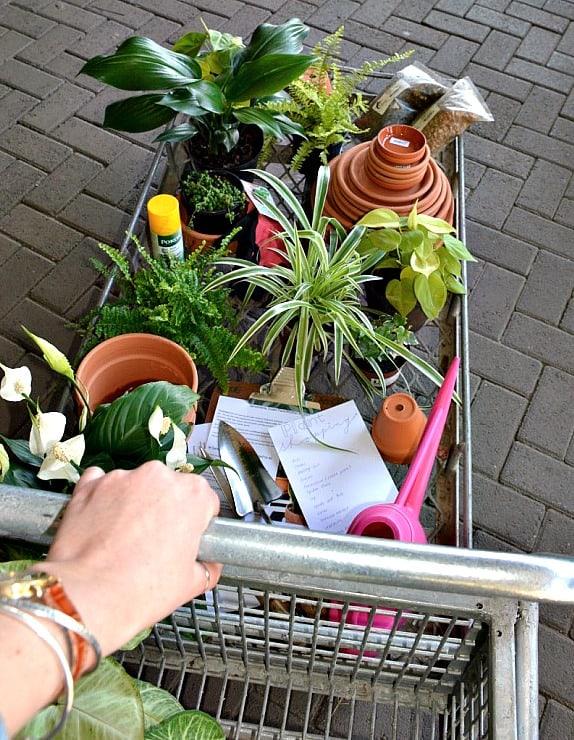 shopping for indoor plants Johannesburg