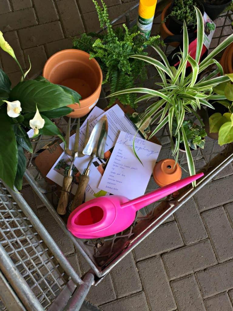 Indoor Plants For Sale Johannesburg on indoor plants for home, indoor plants-interior, indoor plants for christmas, indoor tulips, indoor gardening, indoor birds, indoor water plants on sale, indoor plants for aquarium,