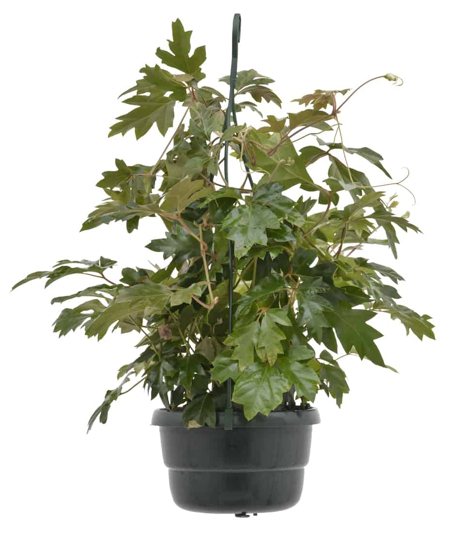 indoor plants for your bathroom lifestyle home garden plant shop and nursery johannesburg gauteng