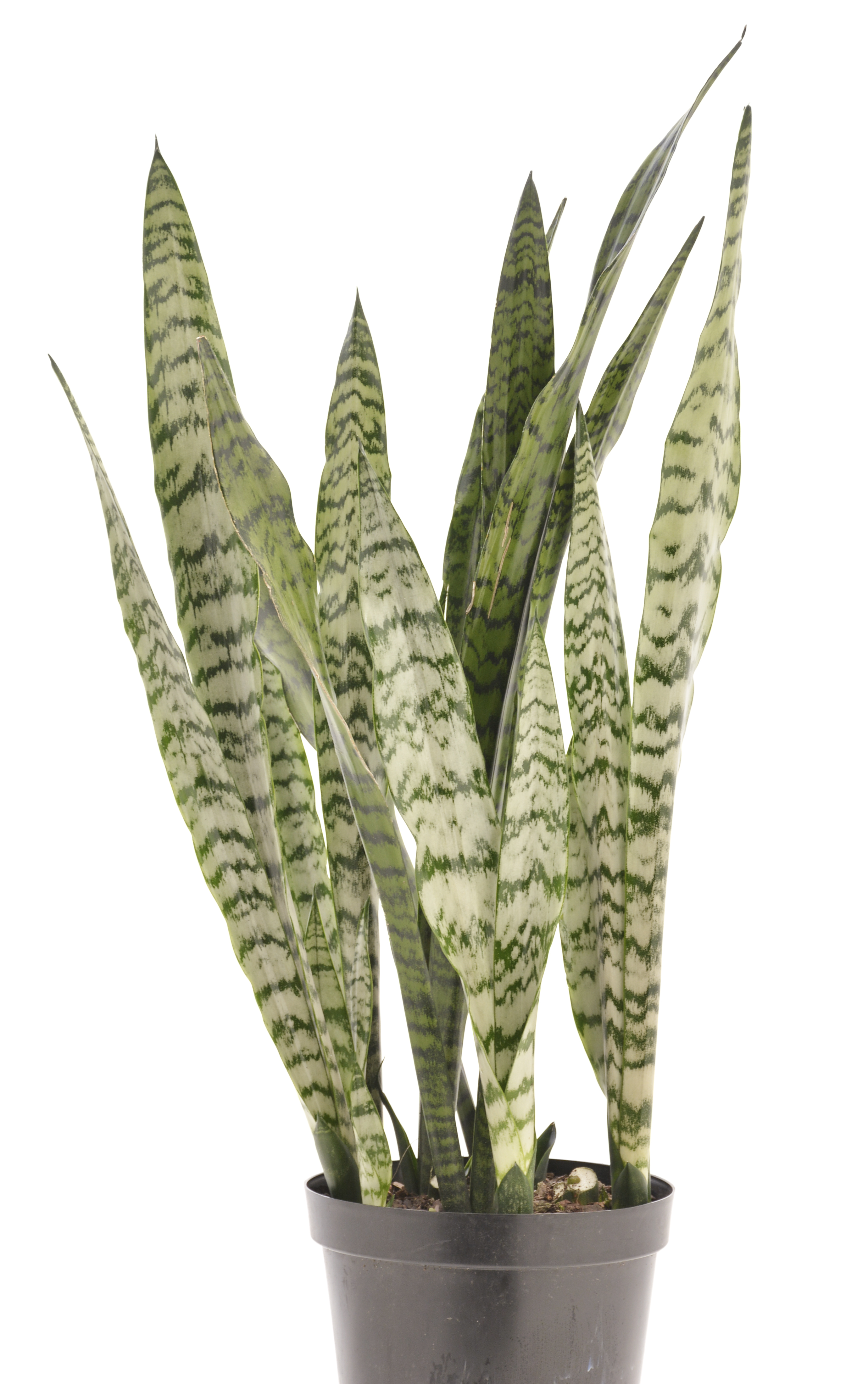 indoor plants for your bathroom lifestyle home garden nursery and plant shop johannesburg gauteng