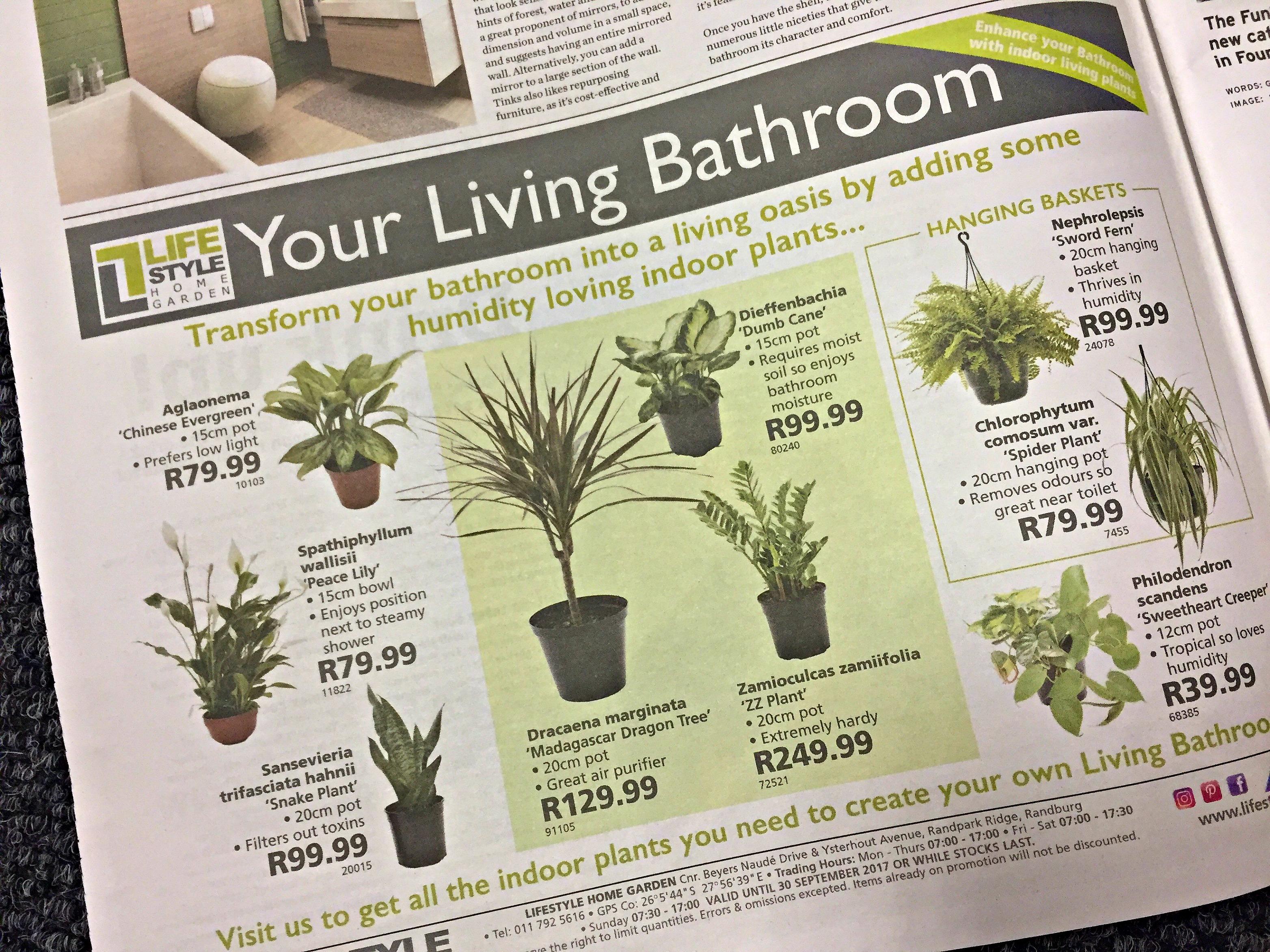 Bathroom Indoor Plants from Lifestyle Home Garden, Nursery and Plant Shop, Randburg, Johannesburg