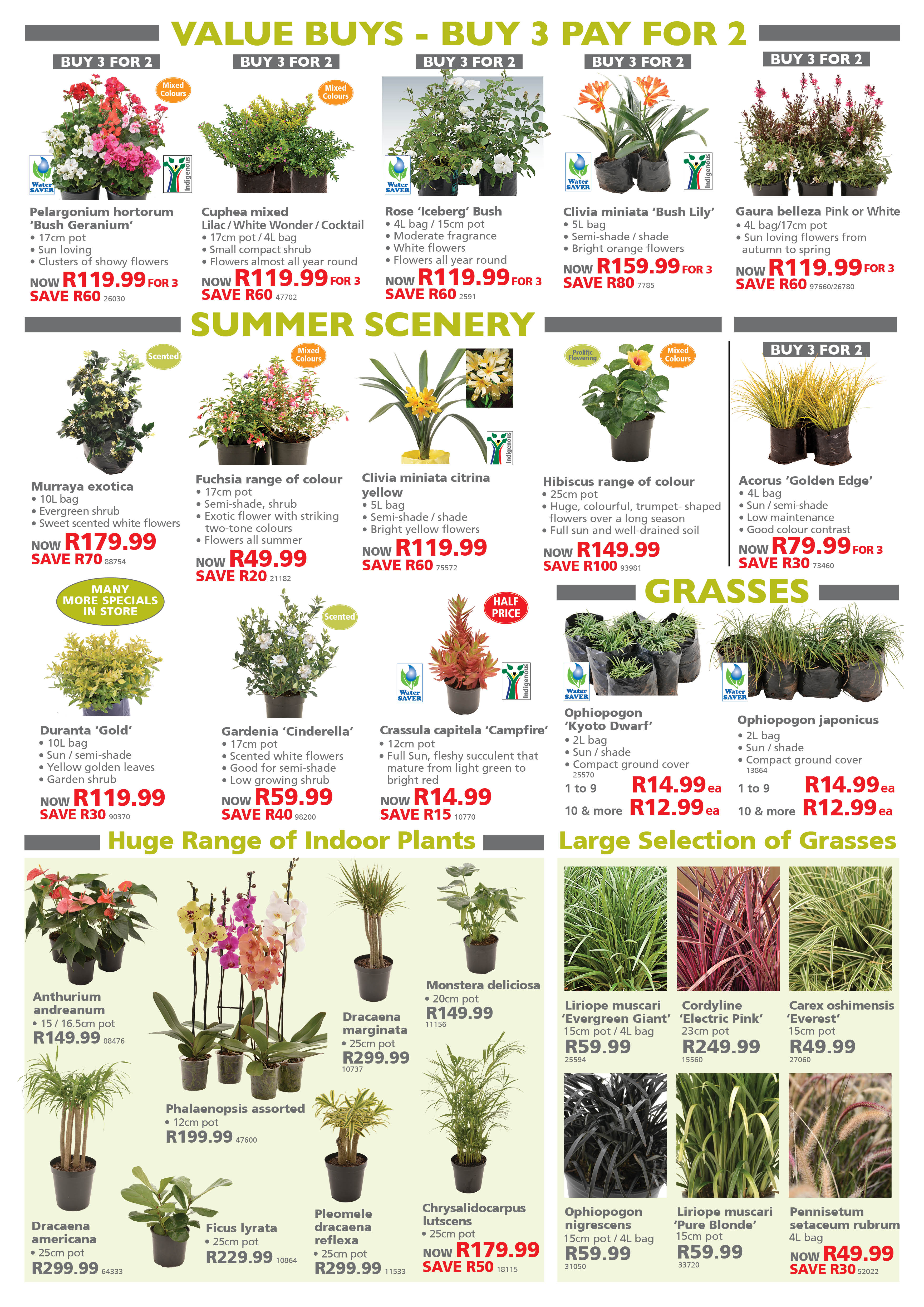 Garden Specials Lifestyle Home Garden plant shop and nursery johannesburg