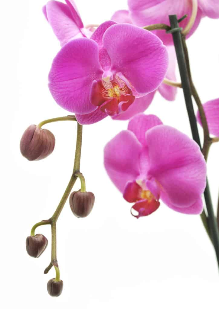 Your Orchid Care Guide From Lifestyle Home Garden
