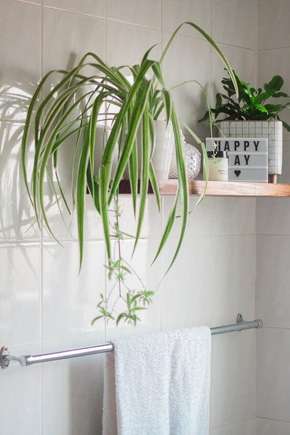 lifestyle home garden indoor plants nursery plant shop johannesburg gauteng