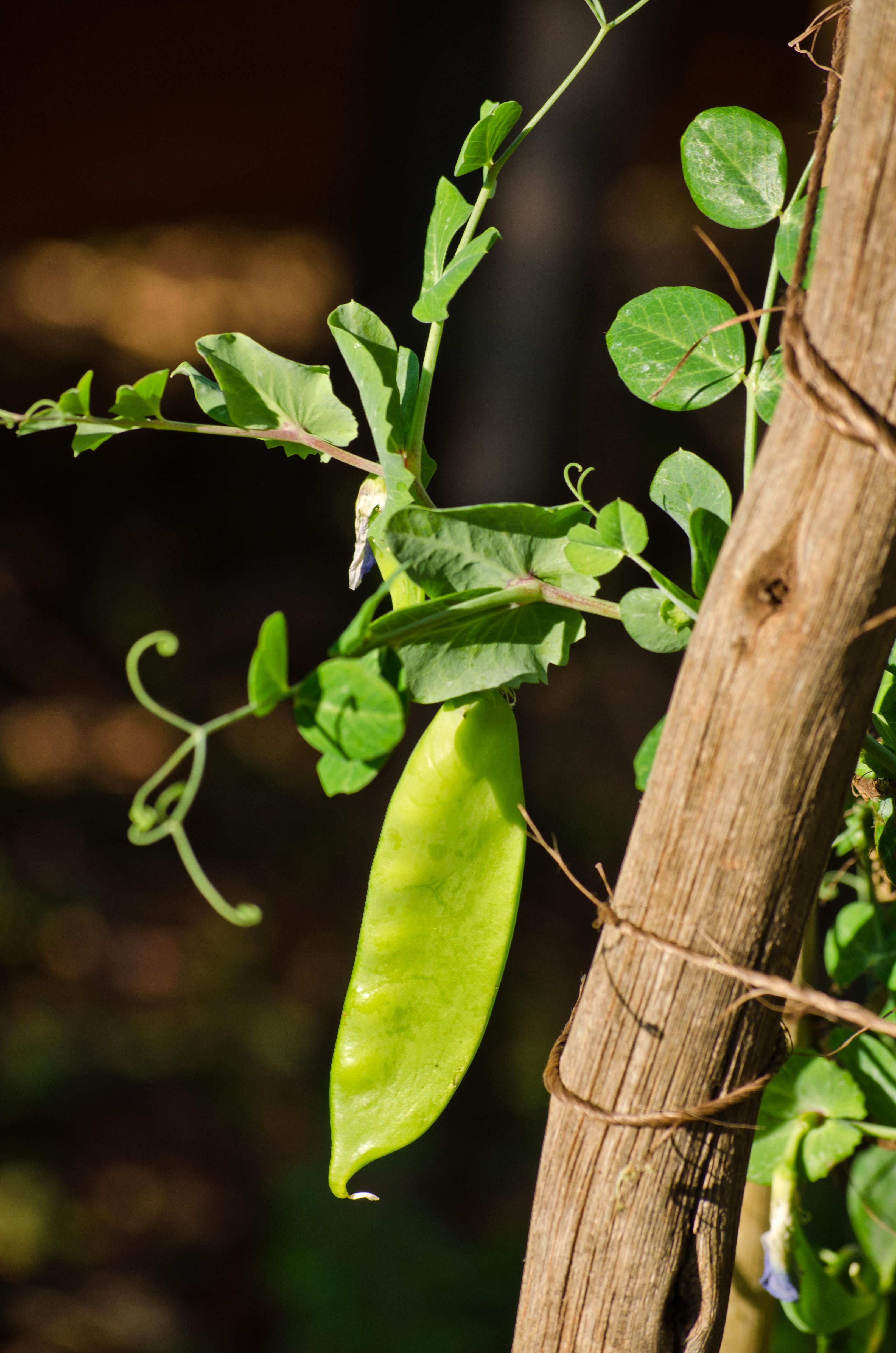 peas lifestyle home garden nursery and plant shop johannesburg gauteng