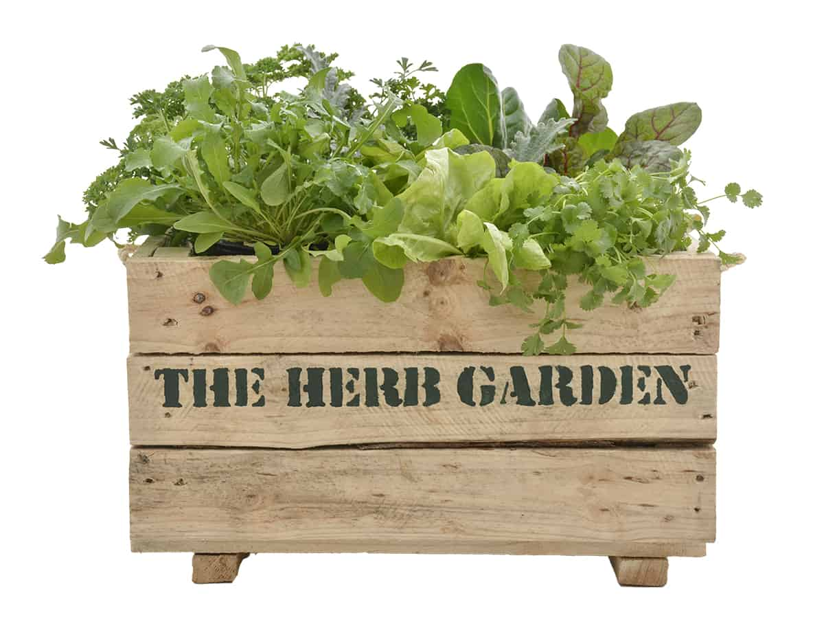 kitchen herbs your living kitchen lifestyle home garden nursery and plant shop johannesburg gauteng