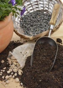 nursery plant shop pantone colour year 2018 untraviolet potting soil repotting petunias gardening winter johannesburg gauteng
