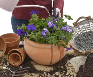 nursery plant shop lifestyle pantone colour year 2018 petunias gardening repotting johannesburg gauteng winter garden