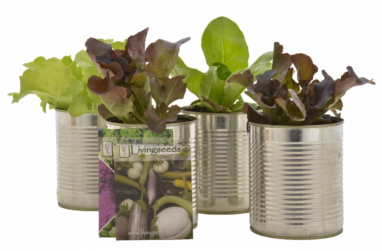 waste free living recycle recycled can tin aluminium potplants kitchen windowsill herbs lettuce johannesburg plant shop lifestyle blog plastic free july livingseeds grow your own