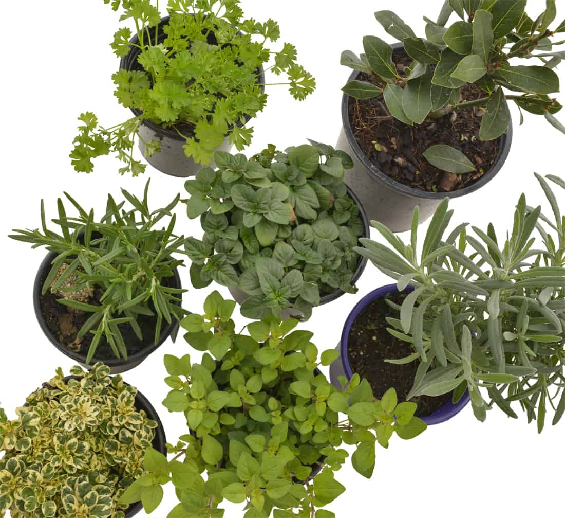 Potager Garden Blogs: An Introduction To Potager Gardening