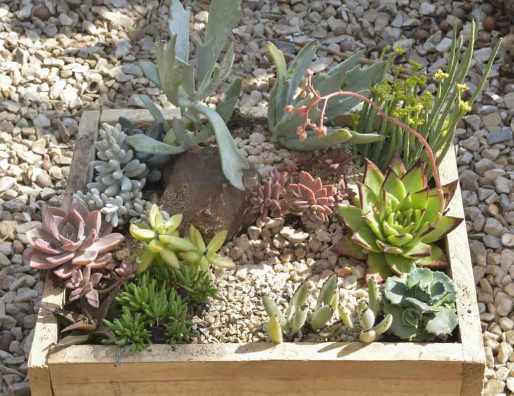 succulent series blog lifestyle full sun nursery plant shop garden xeriscape waterwise johannesburg gauteng