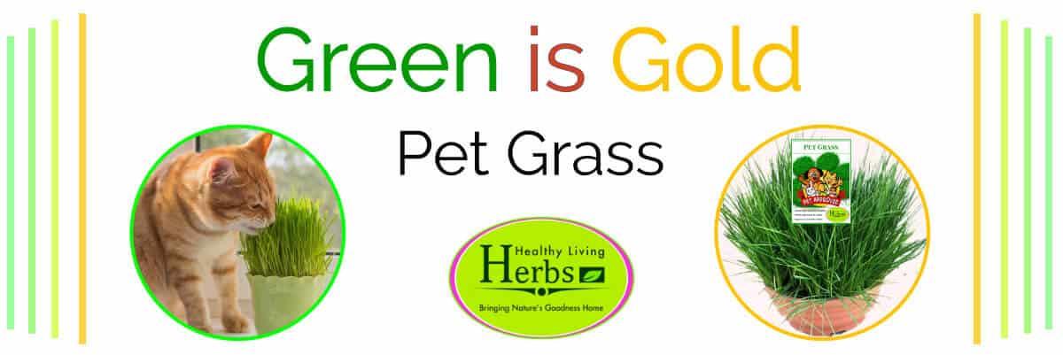 pet grass lifestyle home garden nursery plant shop johannesburg