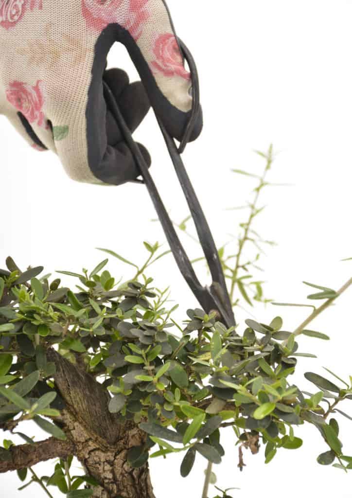 bonsai lifestyle home garden nursery plant shop johannesburg gauteng