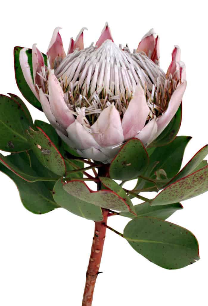 fynbos lifestyle home garden nursery plant shop johannesburg gauteng
