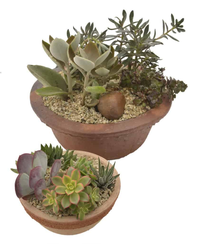 succulent series partial shade lifestyle home garden blog plant shop johannesburg gauteng waterwise gardening garden blog DIY