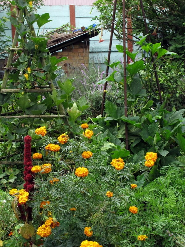 potager blog lifestyle home garden nursery plant shop jane griffiths garden guru vegetables flowers herbs gardening grow your own
