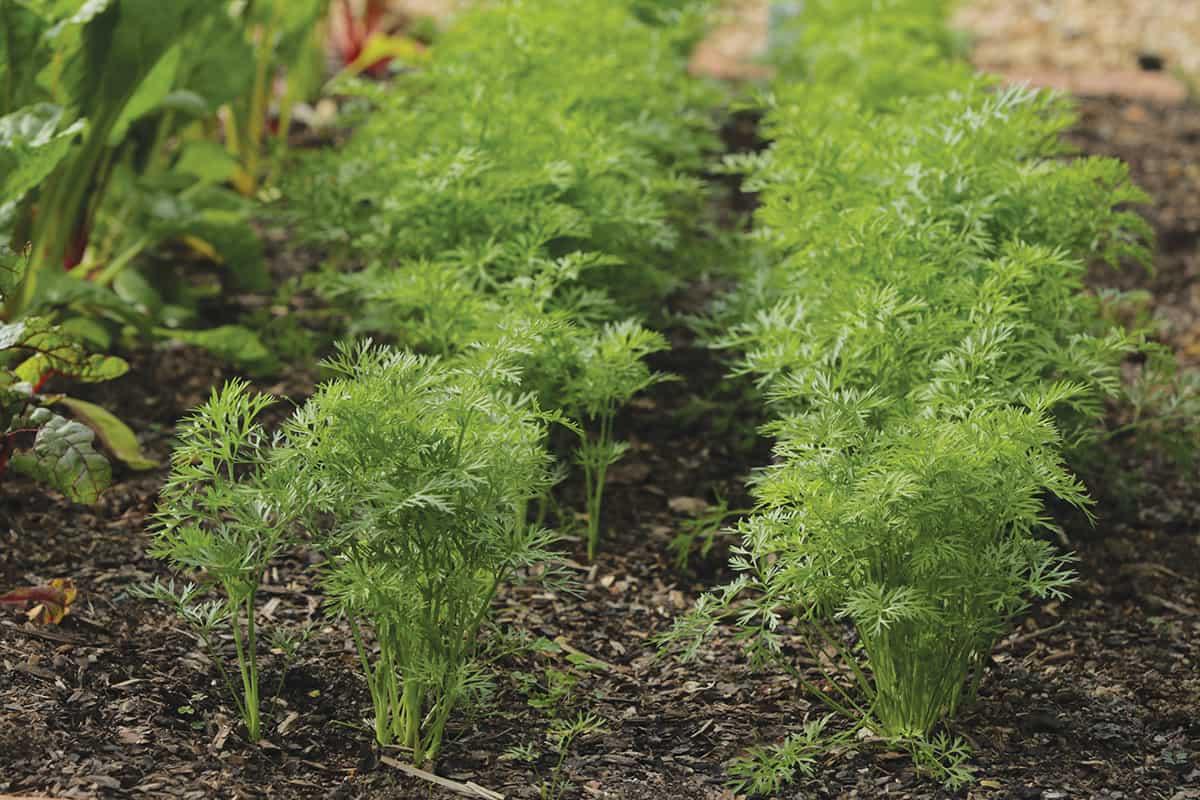 carrots lifestyle home garden nursery plant shop johannesburg gauteng
