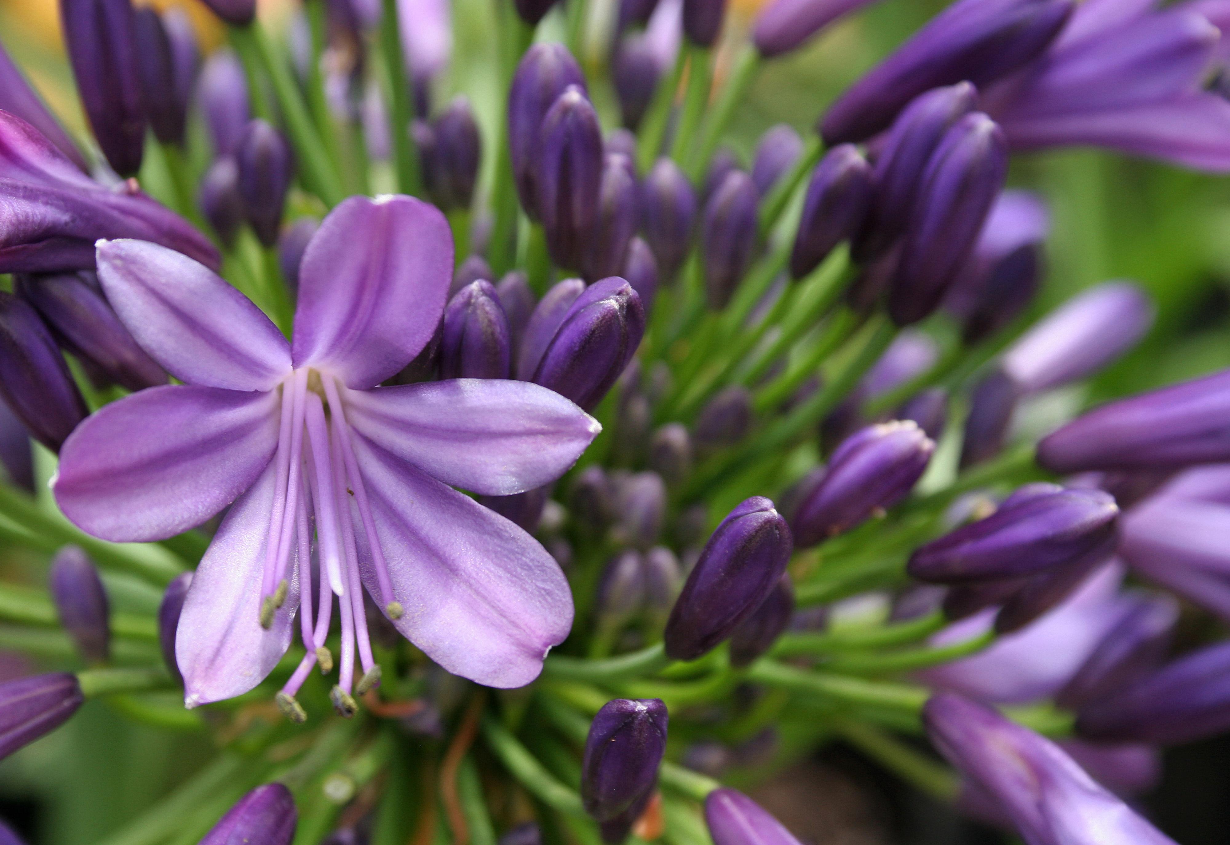november lifestyle home garden nursery plant shop johannesburg gauteng flowers vegetables grow your own herbs