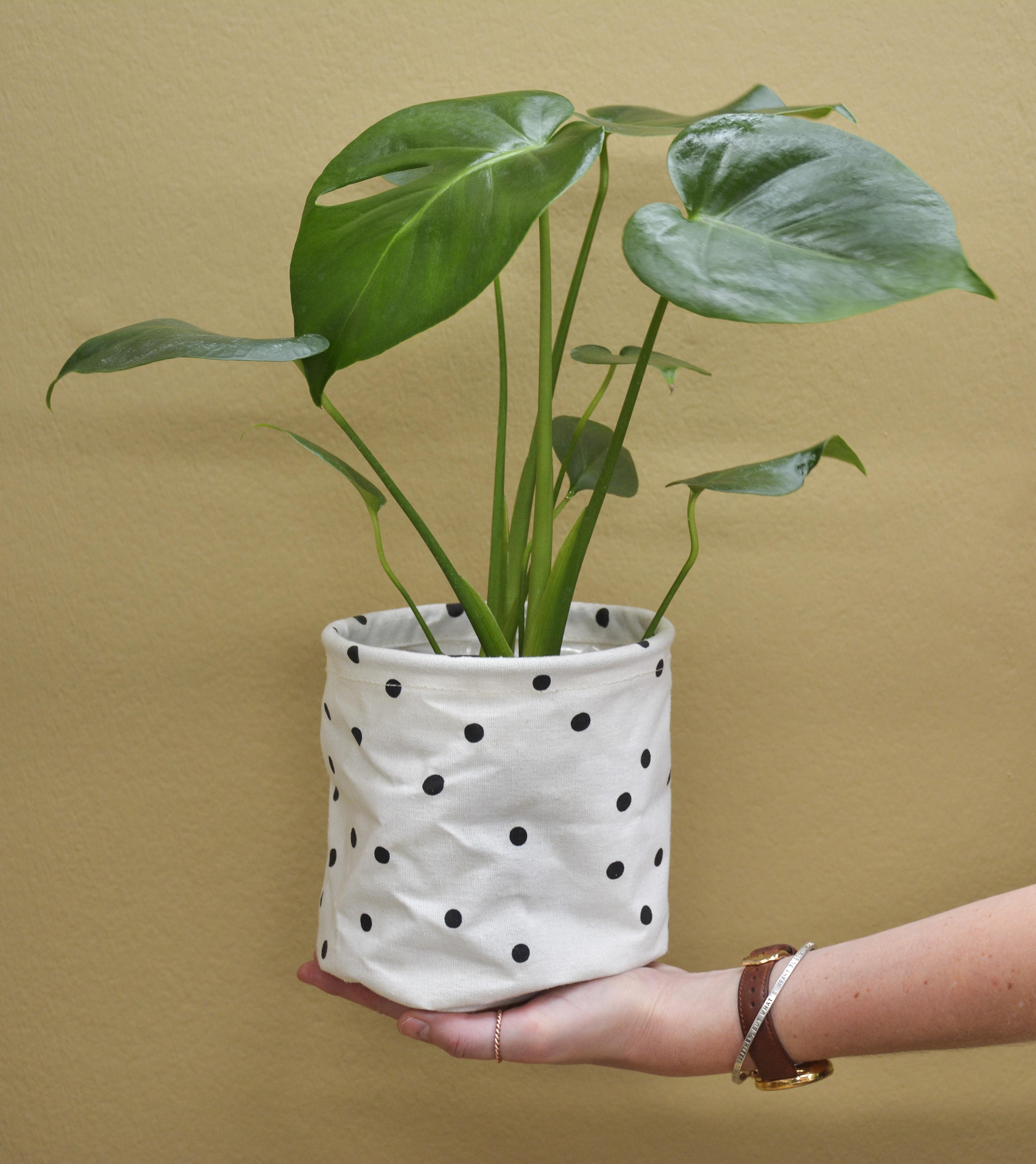 Lifestyle home garden nursery plant shop indoor plant care plants gardening johannesburg gauteng