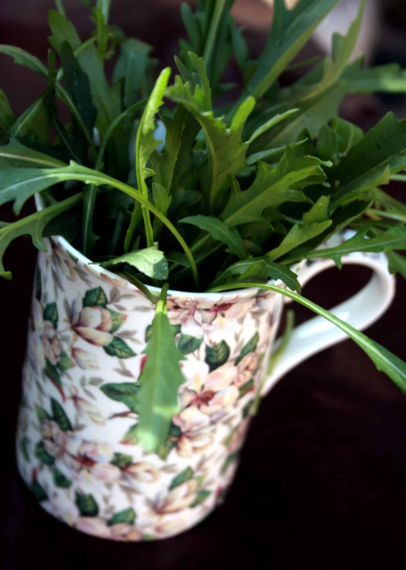 rocket herbs lifestyle home garden nursery plant shop johannesburg gauteng