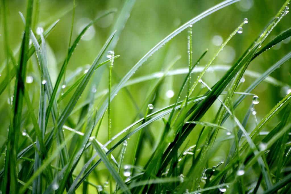 lifestyle home garden nursery plant shop grass rain johannesburg gauteng december gardening