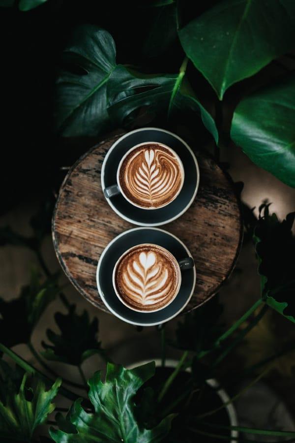 lifestyle home garden nursery plant shop johannesburg gauteng grow your own coffee blog caffeine