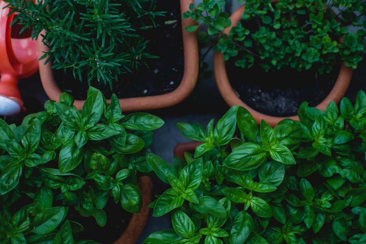 herbs lifestyle home garden nursery plant shop grow your own starke ayres herb johannesburg gauteng