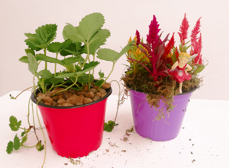 kids korner lifestyle home garden nursery plant shop month love fairy strawberries seedlings