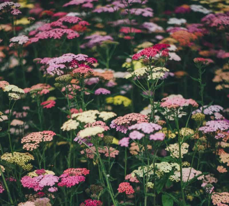 lifestyle home garden nursery plant shop johannesburg gauteng