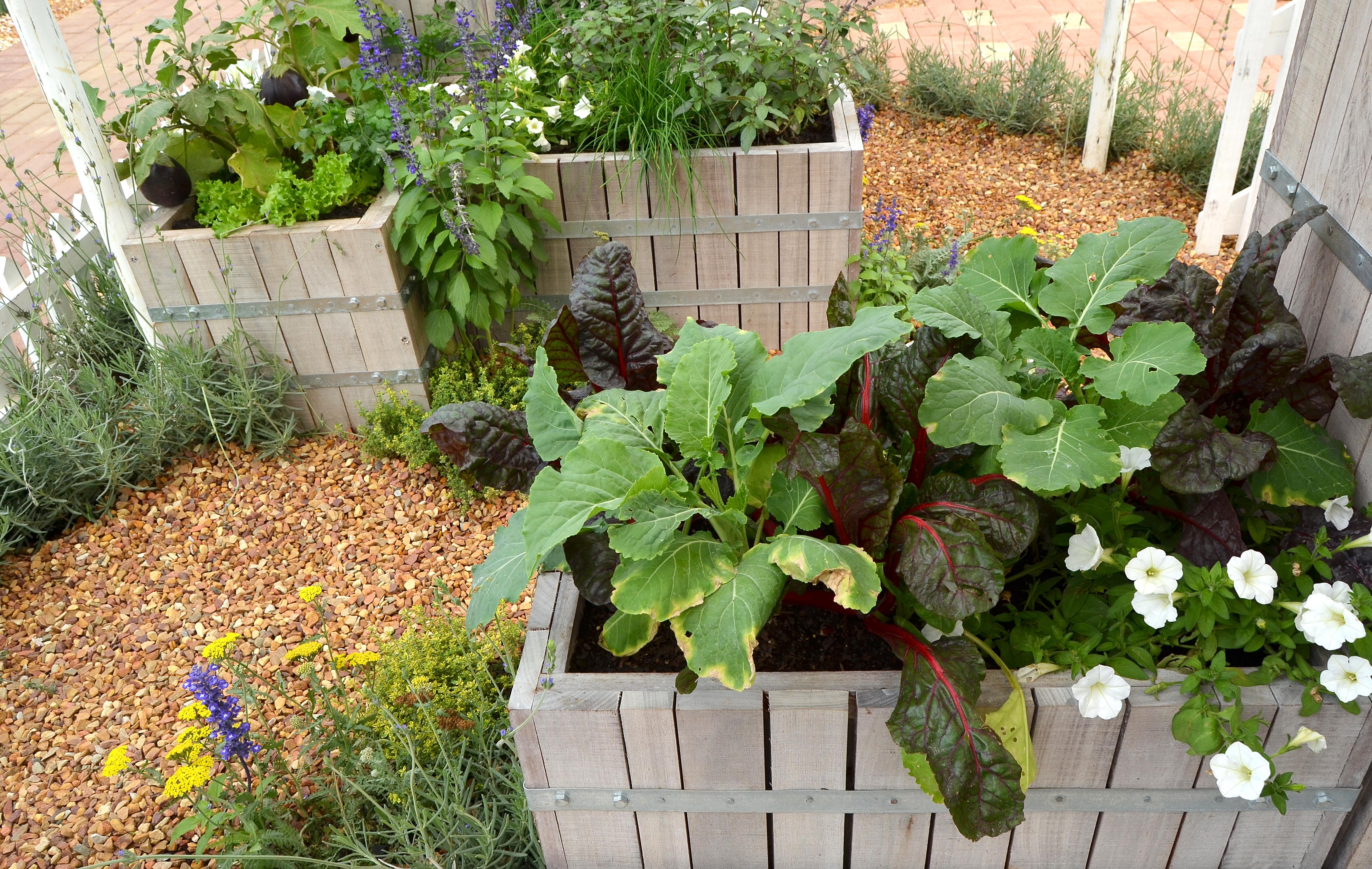 companion planting lifestyle home garden nursery plant shop johannesburg gauteng