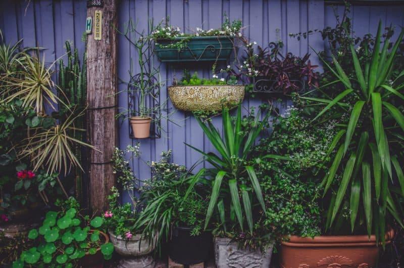 lifestyle home garden balcony gardening urban greenie yucca pots nontraditional space blog johannesburg gauteng