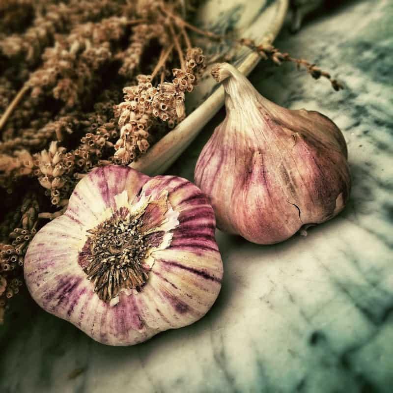 garlic lifestyle home garden nursery plant shop johannesburg gauteng