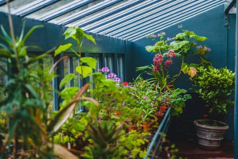 guest gardener lifestyle home garden nursery plant shop johannesburg gauteng