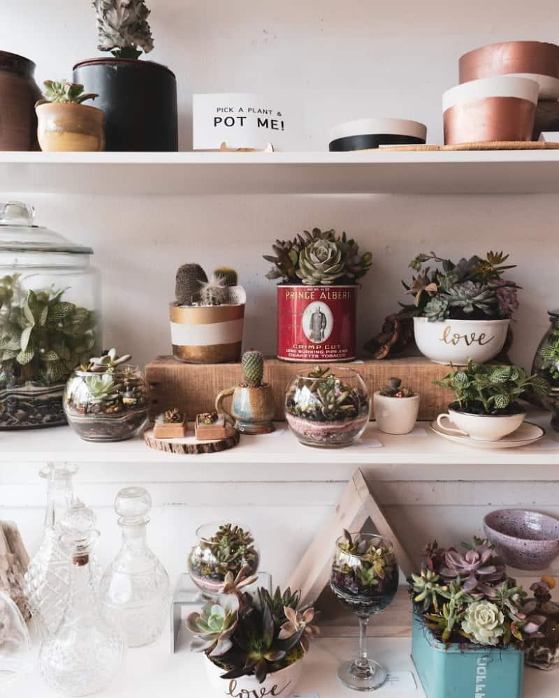 lifestyle home garden pots urban greenie nursery plant shop johannesburg gauteng blog balcony space rooptop plants shelf