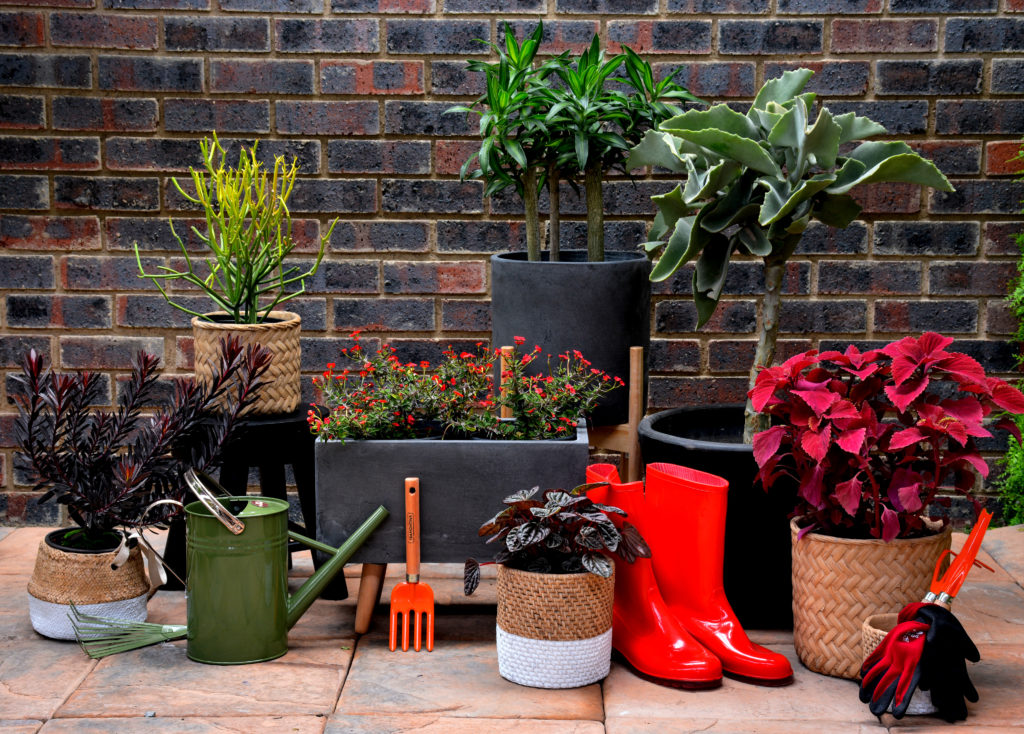 autumn season gardening lifestyle home garden themed styled red orange johannesburg gauteng plant shop nursery