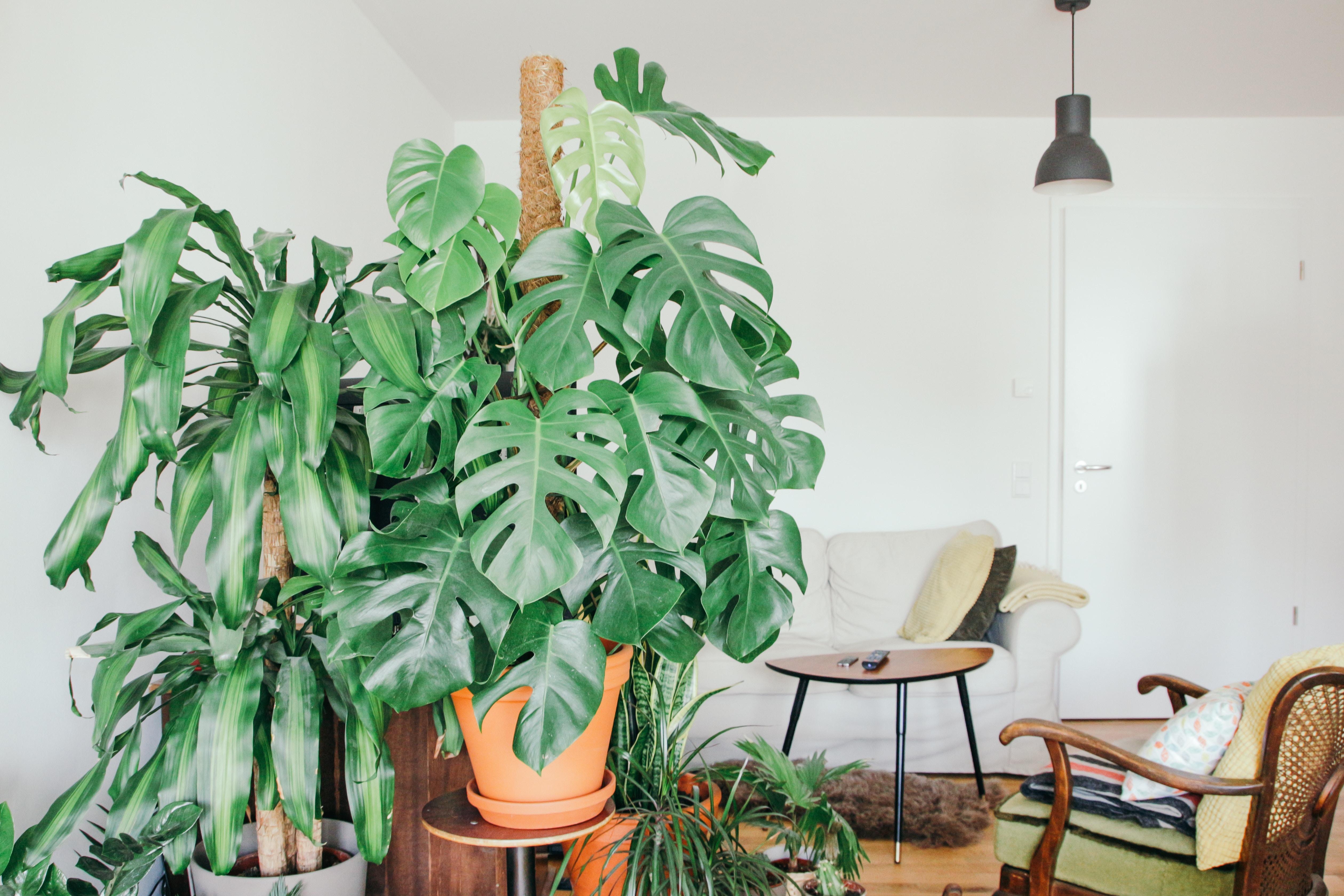 urban greenie gardener lifestyle home garden nursery plant shop johannesburg gauteng